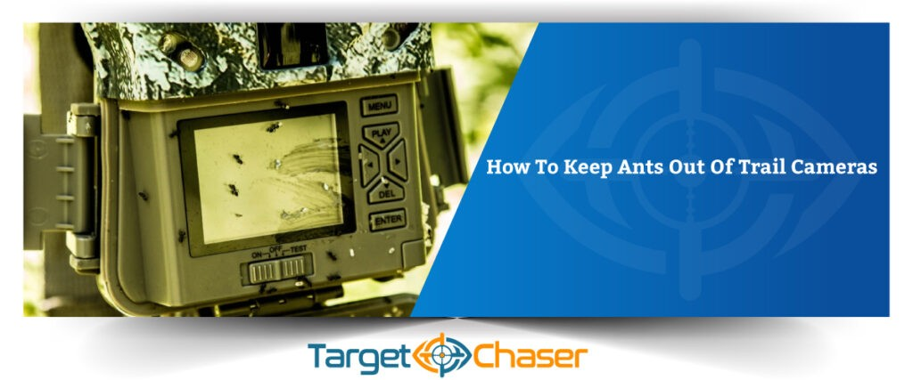 How-To-Keep-Ants-Out-Of-Trail-Cameras