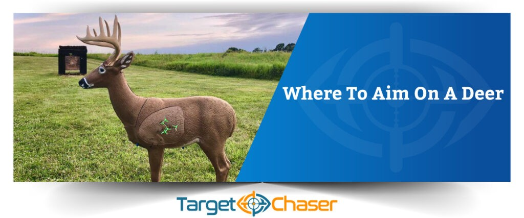 Where-To-Aim-On-A-Deer
